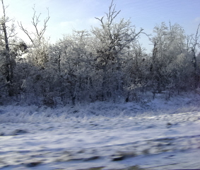Icy trees also make me happy.